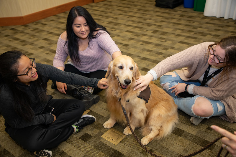 Therapy Dogs Sassy-7108.jpg