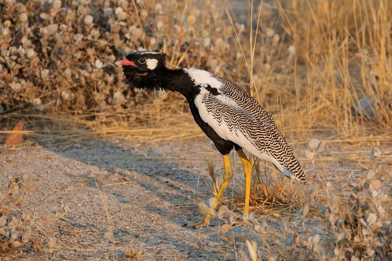 Namibia 69A8825.jpg