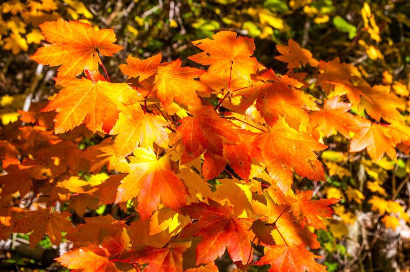 Rogue River_Fall Color-3.jpg