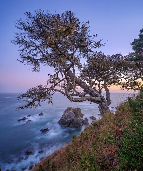 Lone Tree, Twilight
