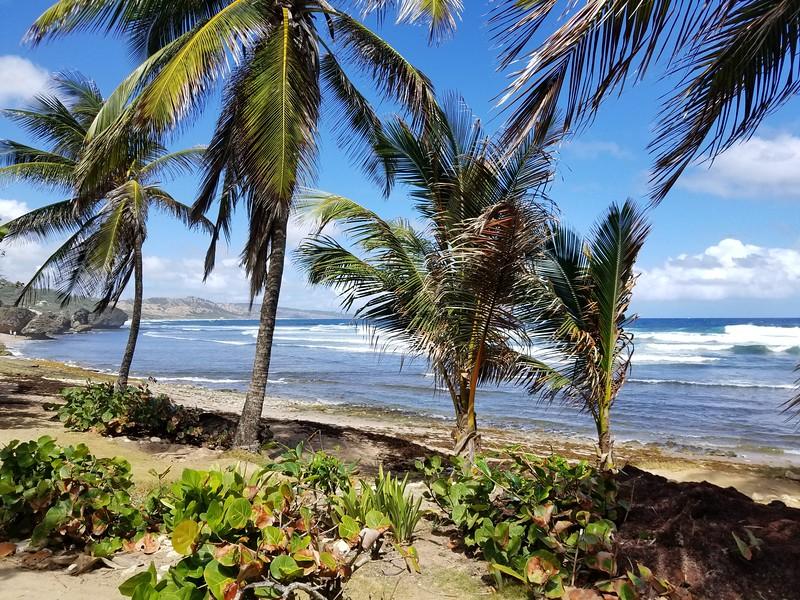 Barbados (35).jpg