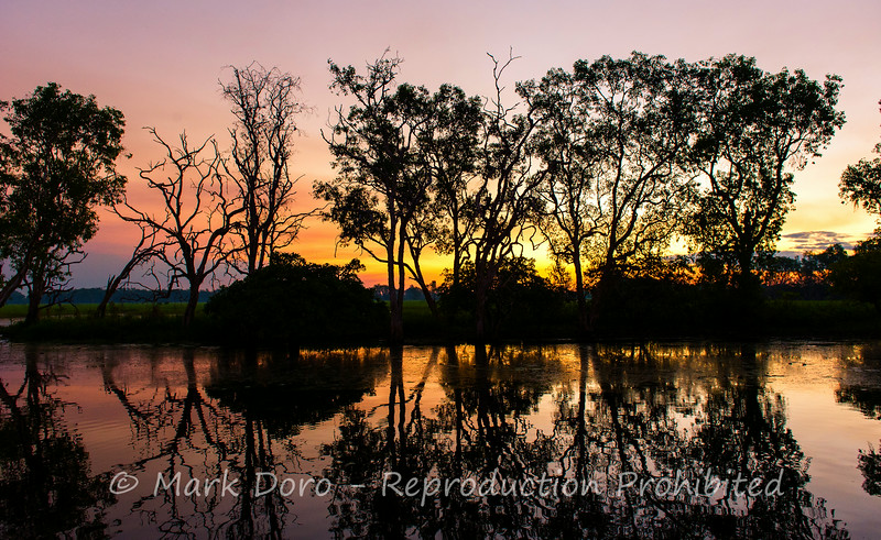 Sunset through the trees, Yellow Water Billabong, Kakadu, Northern Territory