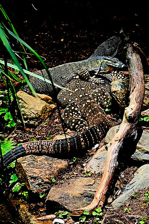 Reptiles & Aquatic