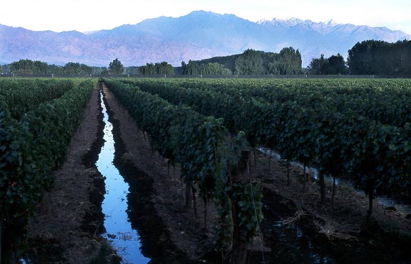 Che 09_Riego x asequia viñas amanecer chilecito .JPG