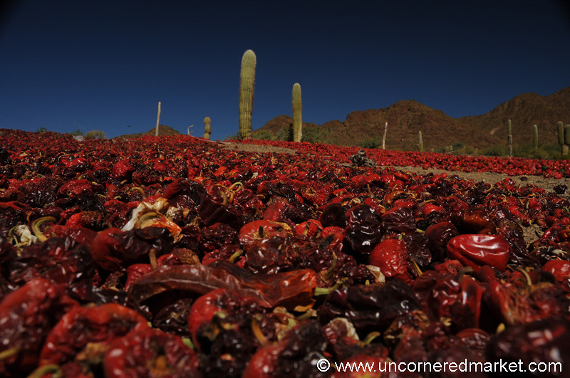 Drying Chilies Outside Cachi, Argentina