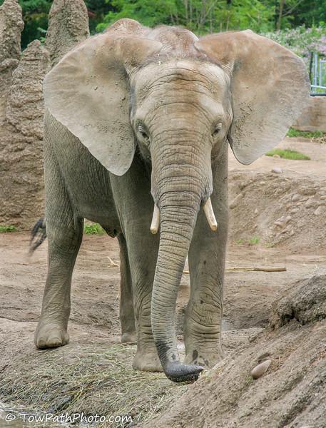 Pittsburgh Zoo and Aquarium Pittsburgh, PA