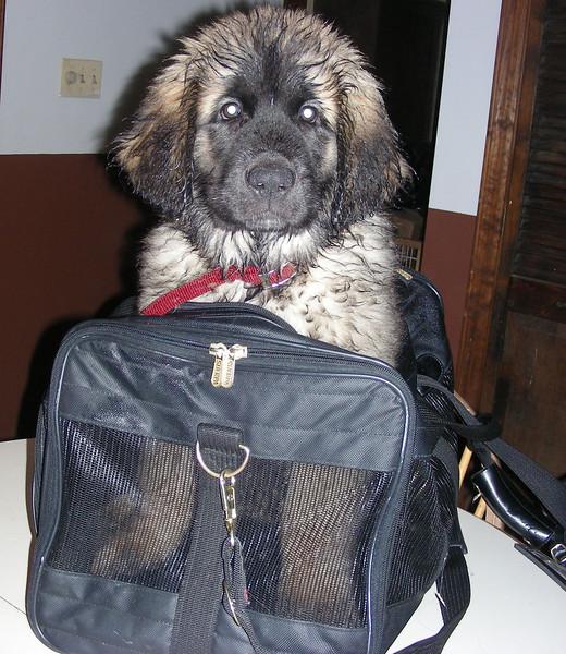 10.25.2007 Puppy in Bag (1)  427.jpg