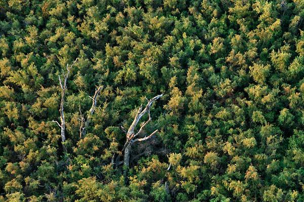 Trees_Cuesta_Ridge_6498.jpg
