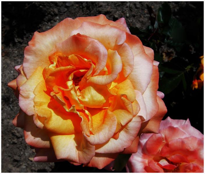 FS 06-05 roseto Fineschi 049.jpg