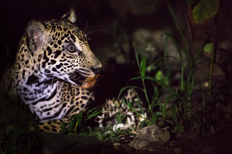 Yucatan_PR_MG_1869.JPG