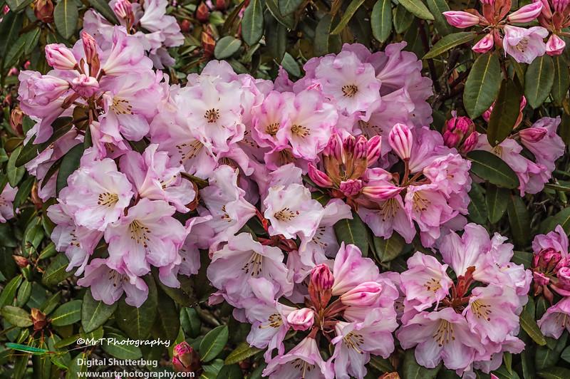 20061028_hollard_garden_0107-Edit.jpg