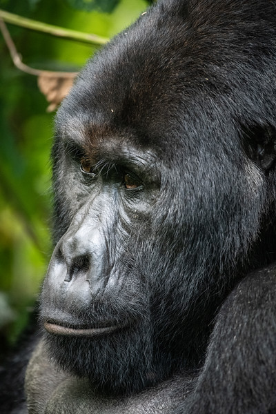 Uganda_T_Gor-2561.jpg