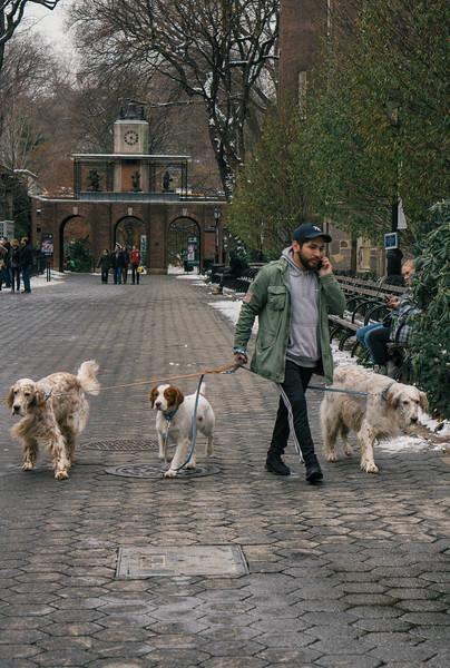 Dog walker central park zoo.jpg