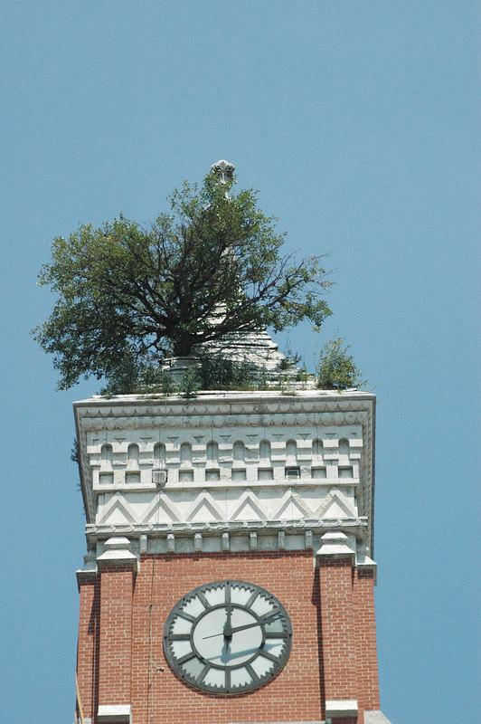 Tower Tree