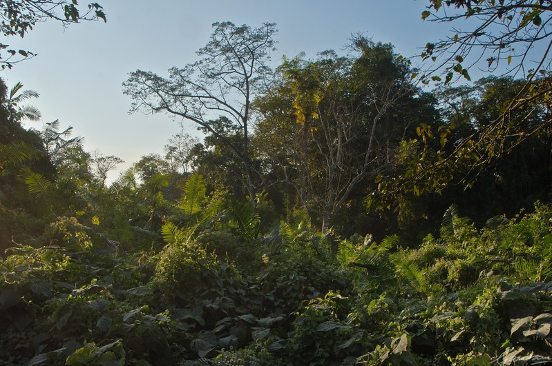 10: Kaziranga Forests 22 December 2011
