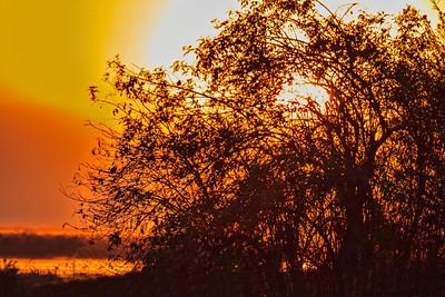 Lodi Sunset