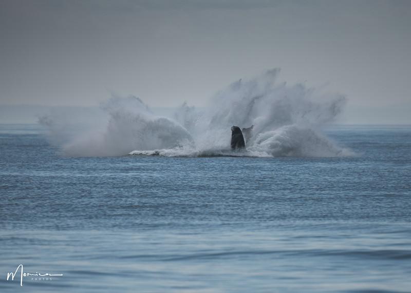 2019-08-31 - Whale Watching-0618_edit.jpg