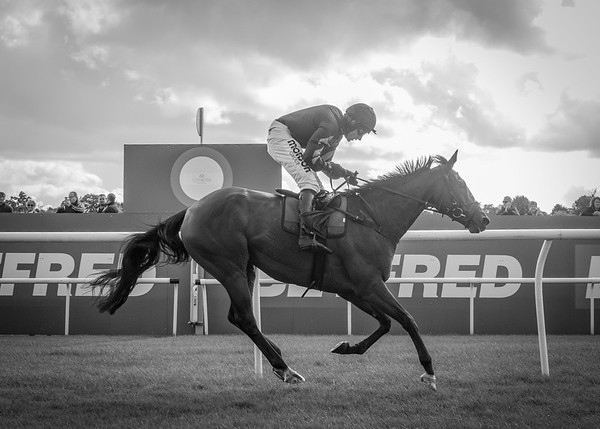 Uttoxeter Races - Wed 13 Sept 2017