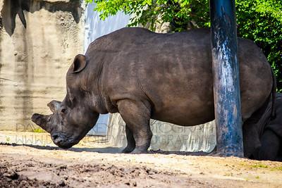 Detroit Zoo 2017
