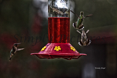 Hummers  (32)