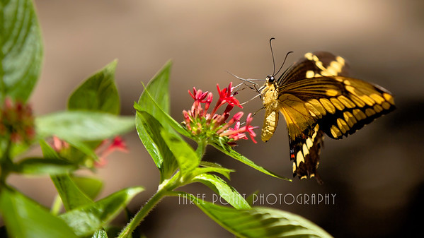 Butterfly Garden in Gainesville