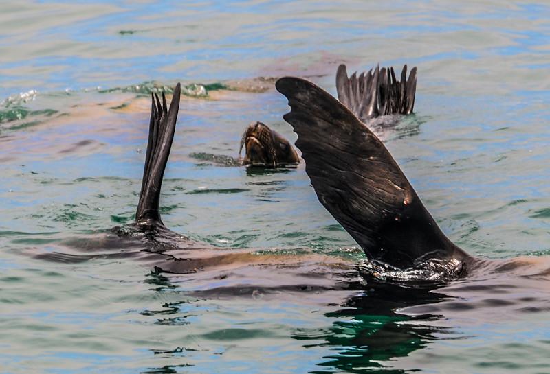 Newport Harbor_Sea Lions-5.jpg
