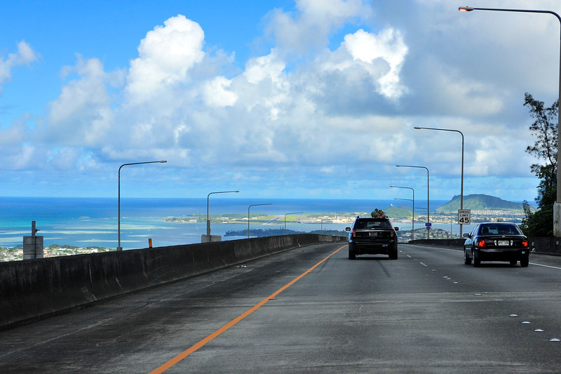Hawaii_Christmas_Tree_8.jpg