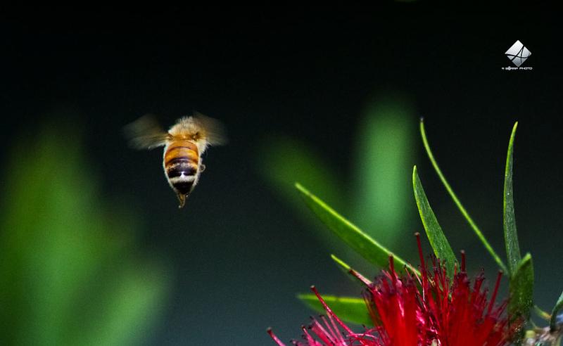 Day 379 - Bumblebee 2
