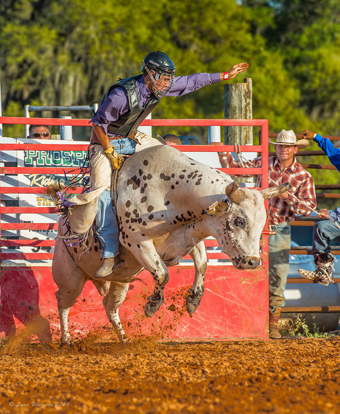 2014 Local Rodeo