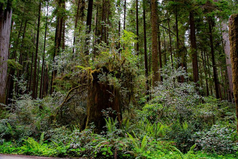 redwoodsFin-0981.jpg