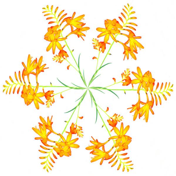Colwick Flower~1061-3pcr.