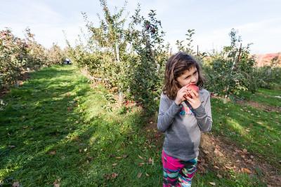 Apple Picking - Fall 2017