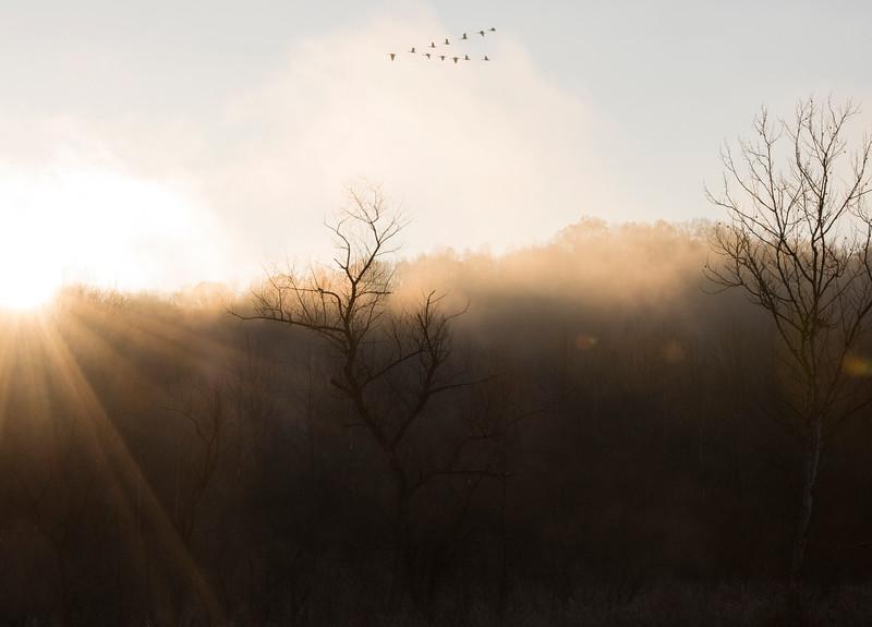 beaver marsh 01.jpg