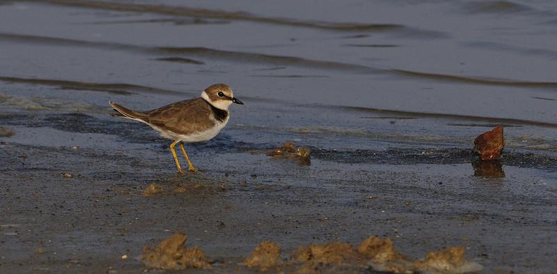 Dec 2009 - Birding
