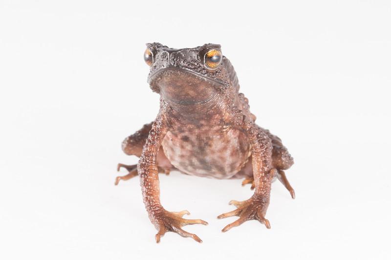 Biodiversity Group, DSC01925