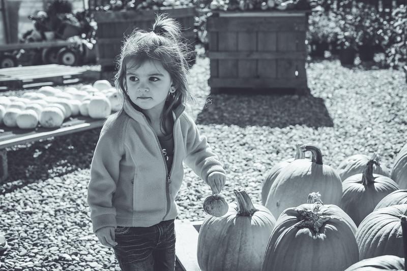 pumpkin picking 10-2016 _IMG_0889.jpg