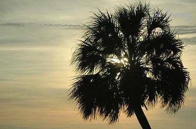 Tampa, Picnic Island Park