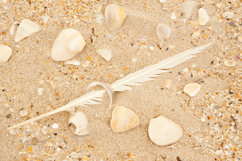 Feather through shell