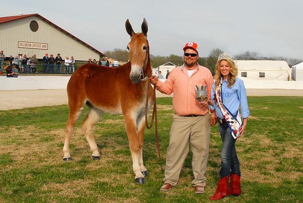 2014 Draft Mule