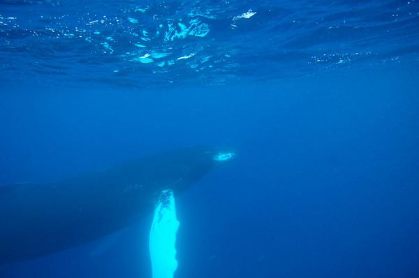 Humpback Whales April 2009