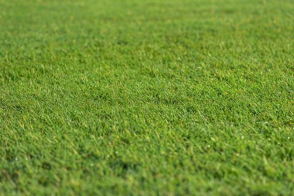 Virginia Green Lawn Care - High Resolution