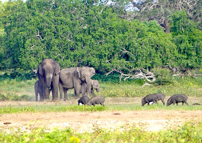 Trip to Yala -  March 30-31, 2017