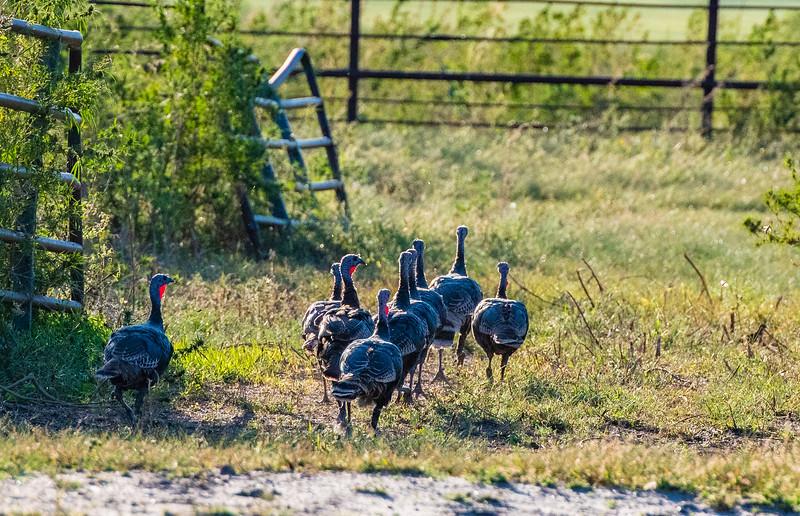 Horn Ranch-3723.jpg