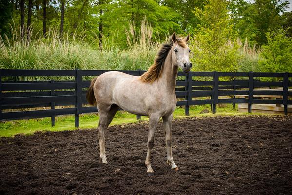CedarBrook Arabian Horse Farm