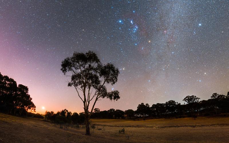 P4 West Tree Orion-10 Panorama-2.jpg