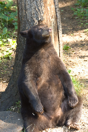 Bears (and more)!