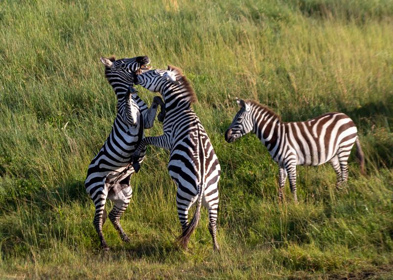 ZebraWildebeest-102_0218_3421.jpg