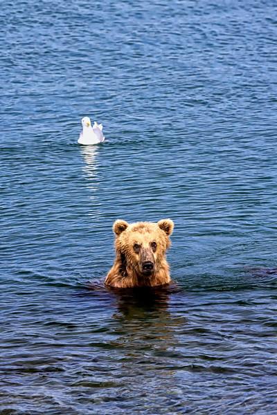Alaska_2013_FH0T5396.jpg