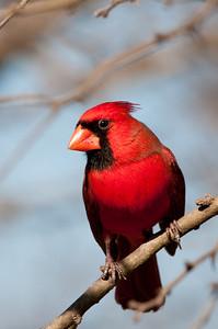 Cardinals 30Dec08