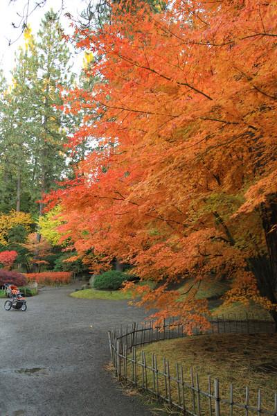 fall-0110-2.jpg